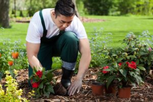 Kinds of Gardens – Home Gardening Hobby
